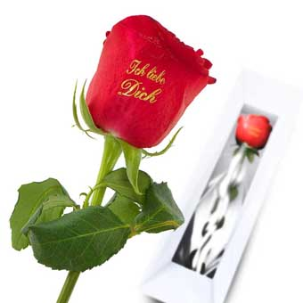 I Love You Red Rose Rose With Print Euroflorist