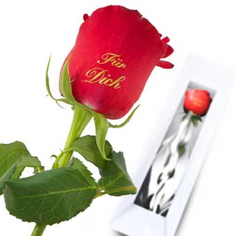 For You Red Rose