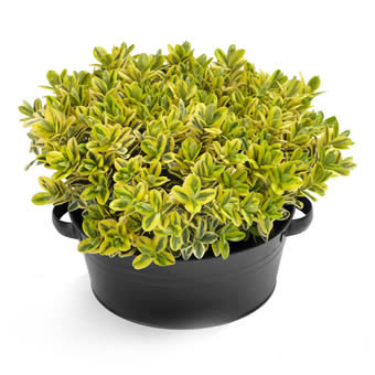 Pflanzenversand noch heute floristen liefern pflanzen for Pflanzen liefern