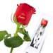 For Mum Red Rose