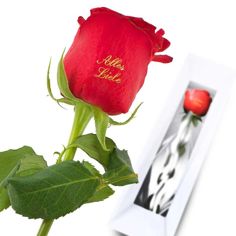 With Love Red Rose
