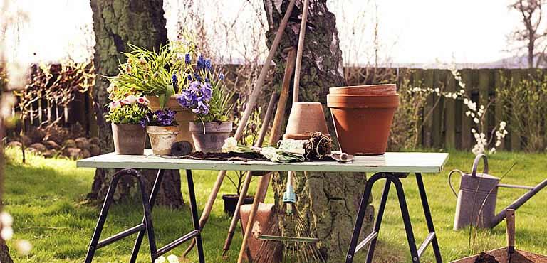 Send Spring plants online