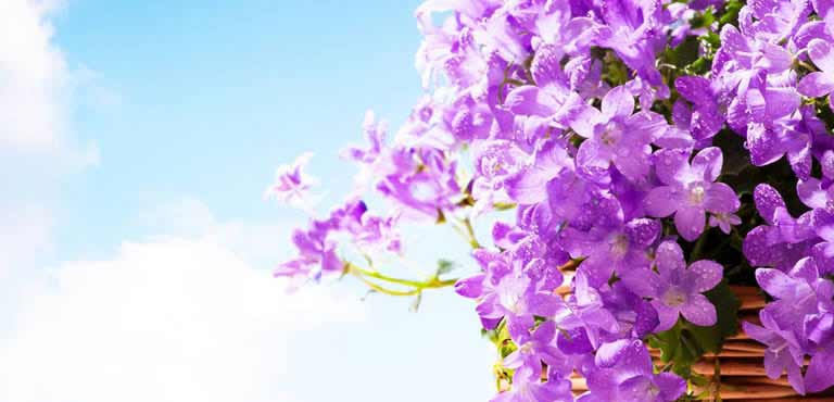 Blumenkörbe