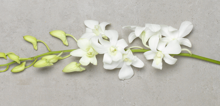 Send orchids online