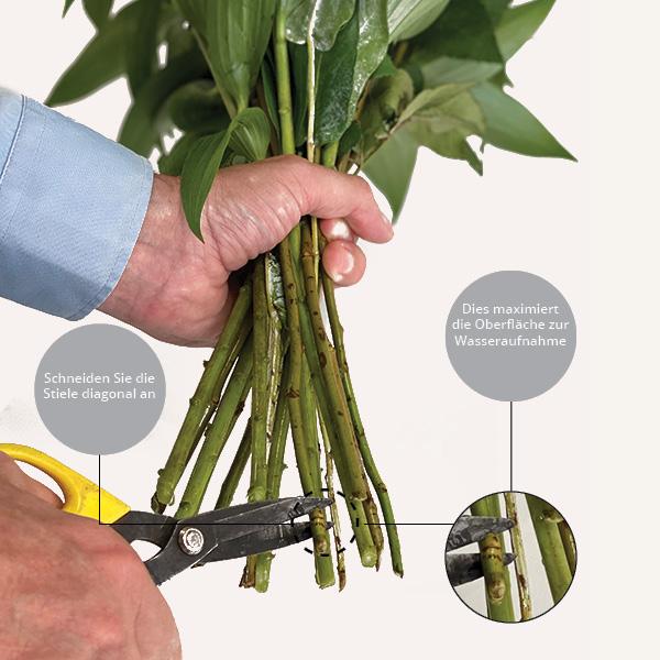 Schritt 2 Rosenpflege: Stiele diagonal anschneiden