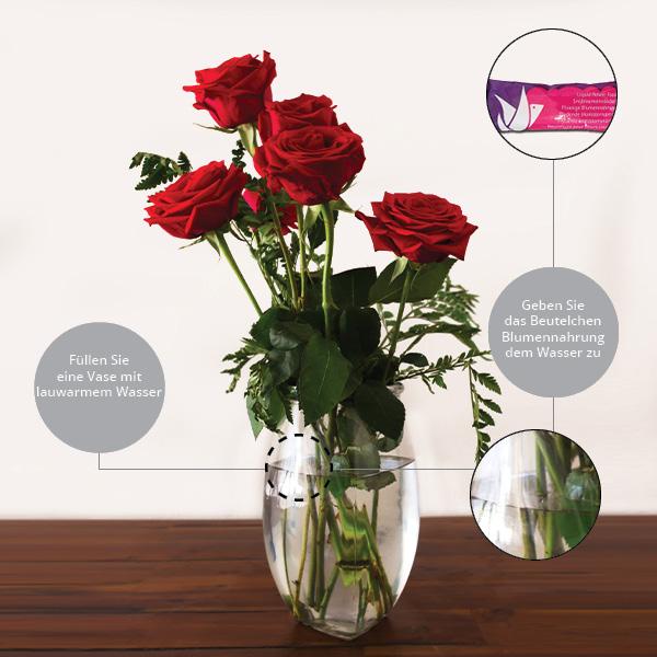 Schritt 3 Rosenpflege: Lauwarmes Vasenwasser und Blumennahrung