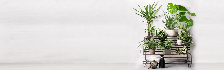 Plants_2020-1170x370